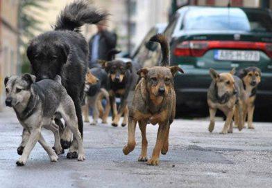 """JP """"Veterinarska stanica"""" Kalesija: Svi vlasnički psi moraju biti mikročipovani i registrovani"""